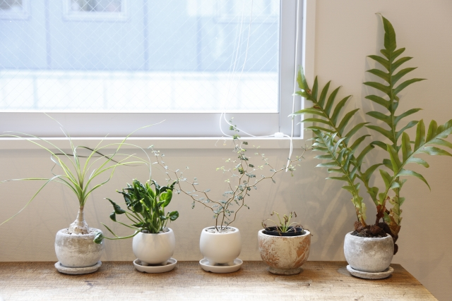鉢植え,土,種類